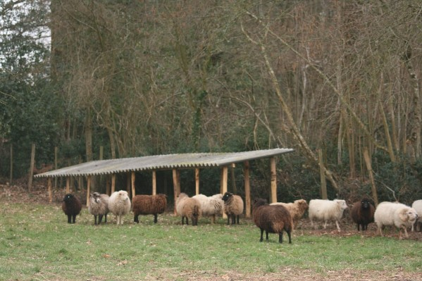 abri pour mouton