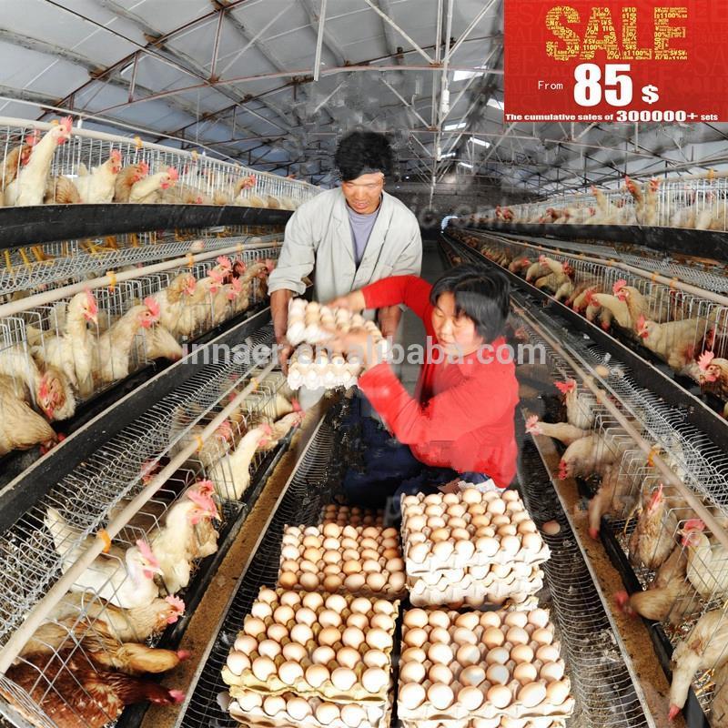 achat poules pondeuses