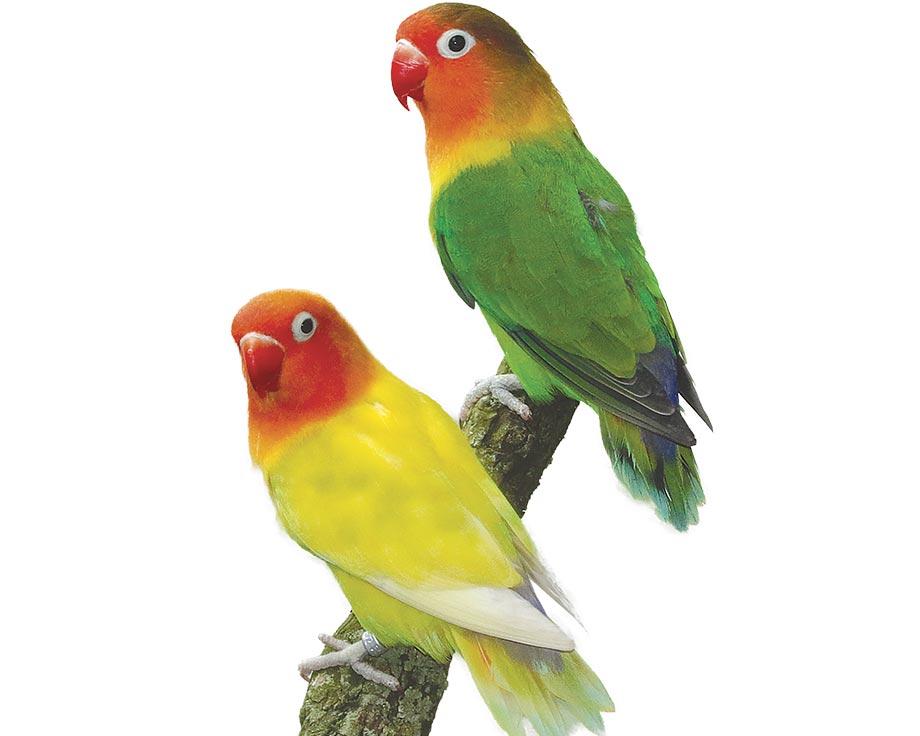 acheter oiseaux exotiques