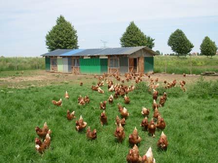 acheter poules pondeuses bio