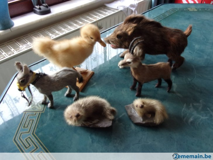 animaux miniatures a vendre