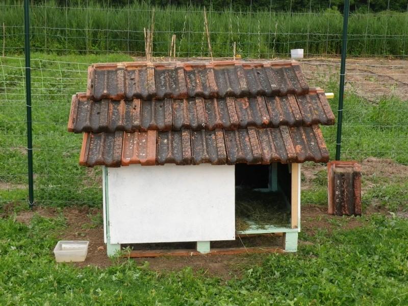 cabane pour oie