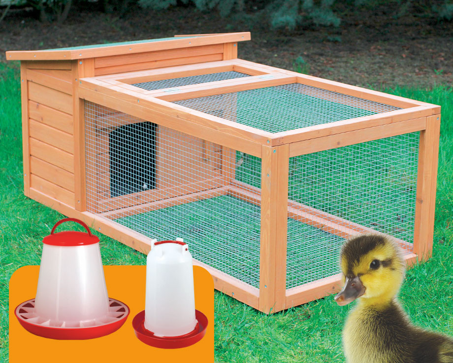 cage a poussin