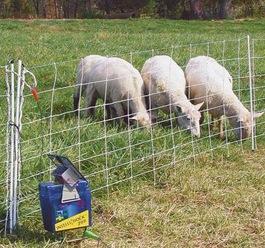 cloture electrique mouton