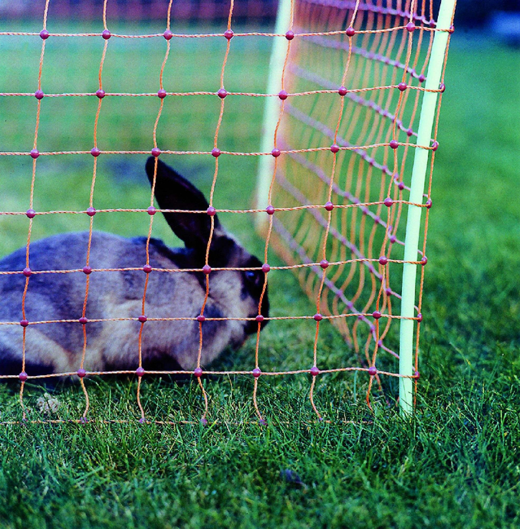 cloture electrique pour lapin