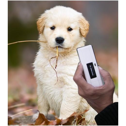 detecteur de puce pour chien