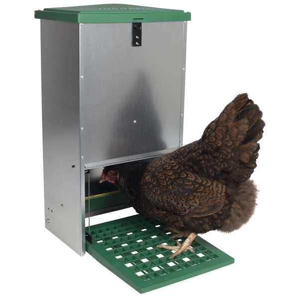 distributeur automatique de nourriture pour poules