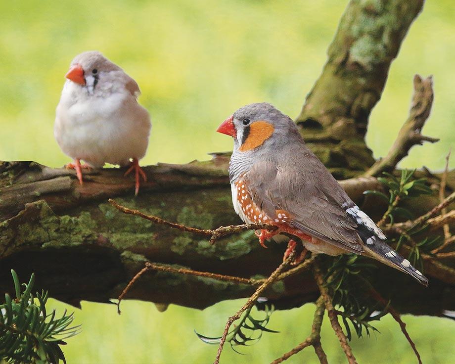 elevage oiseaux exotiques