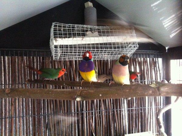 eleveur oiseaux exotiques