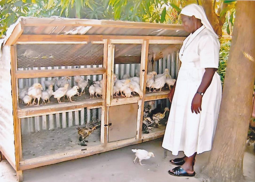faire un poulailler pour 10 poules