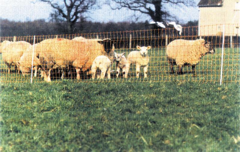 filet electrique mouton