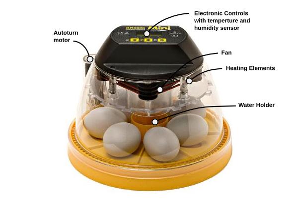 incubation artificielle