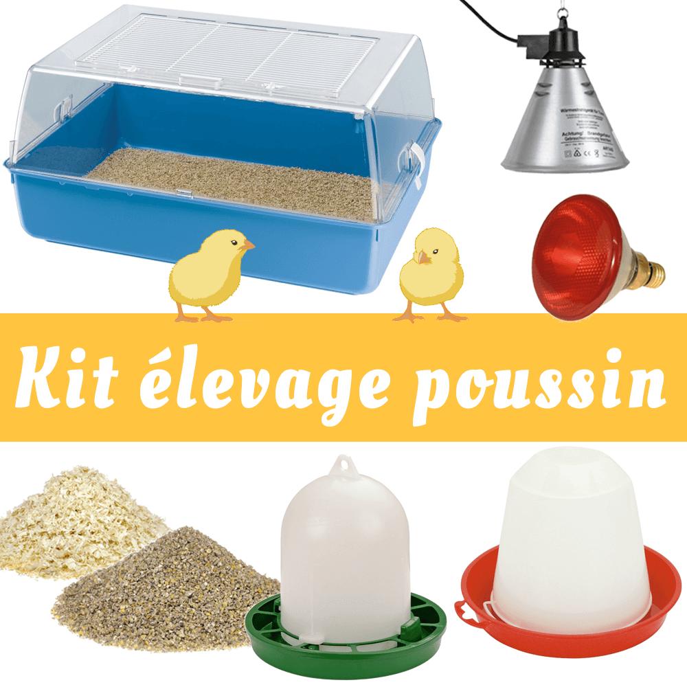 kit elevage poussin