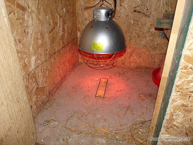 lampes chauffantes pour poussins