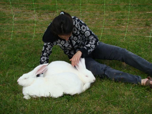 lapin blanc de bouscat