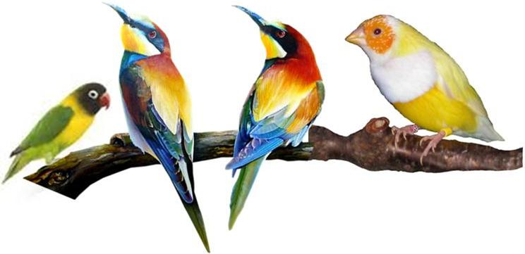 les oiseaux exotiques