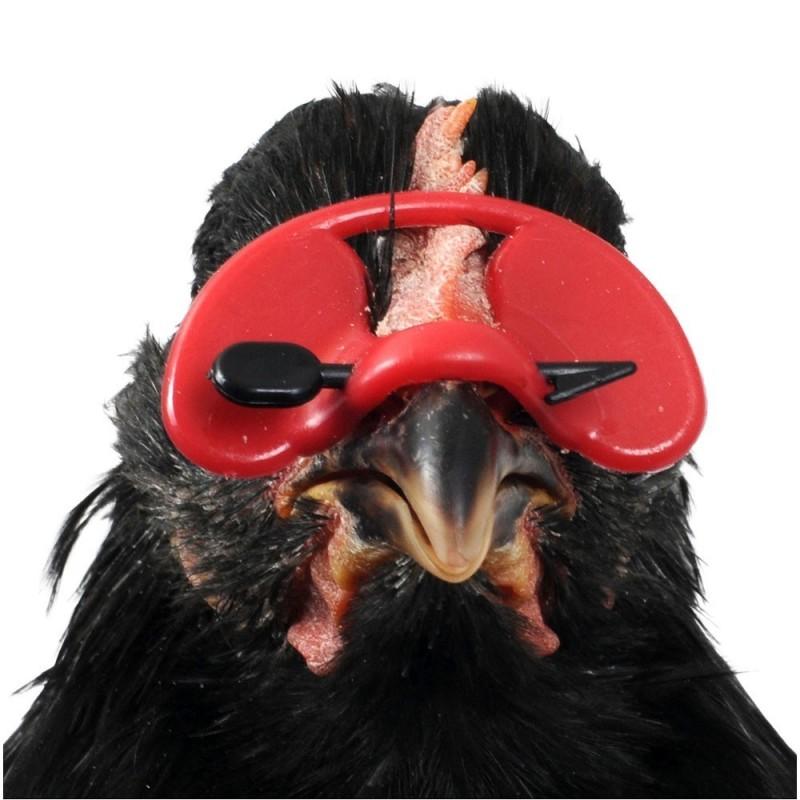 lunette pour poule