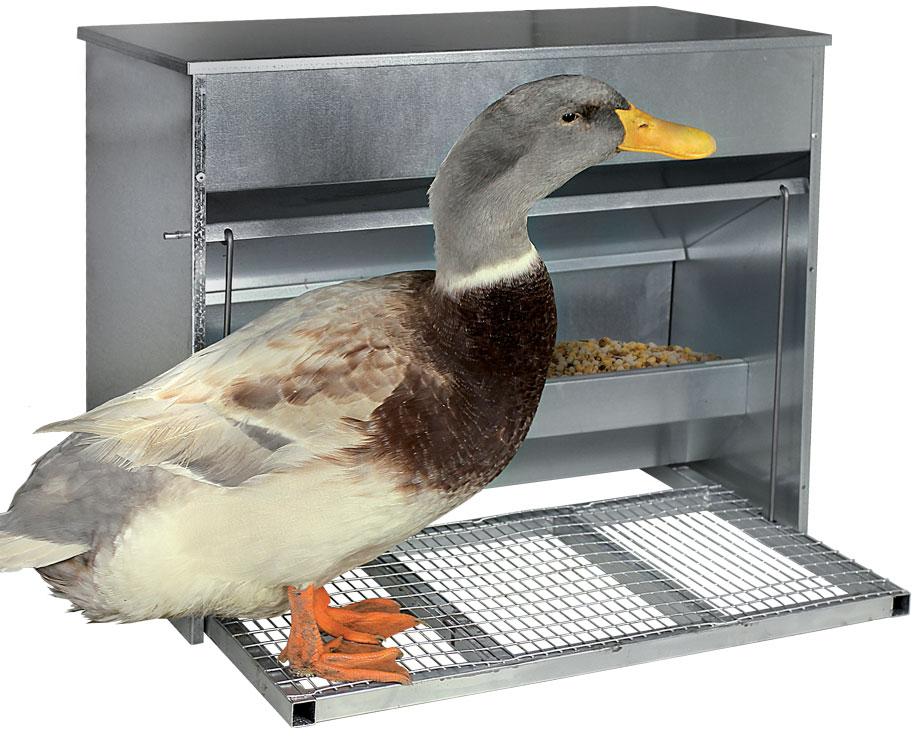 nourrisseur canard