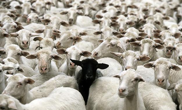 ou acheter un mouton