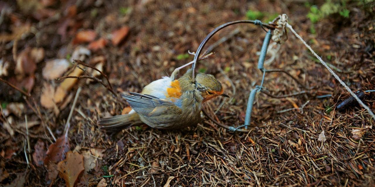 piege oiseaux