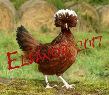 poule hollandaise huppee
