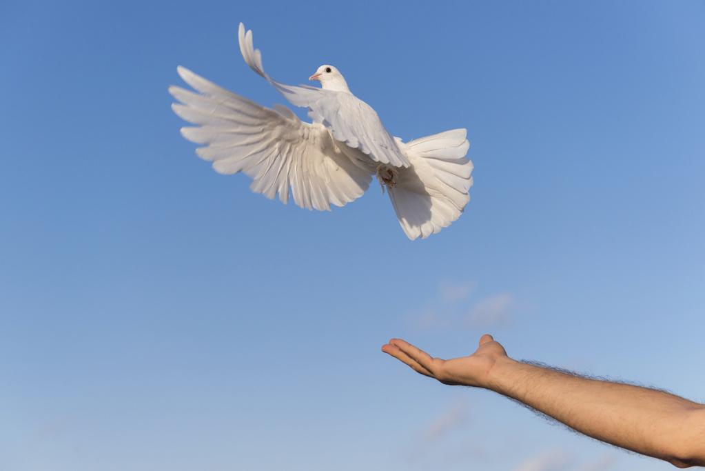 prix d une colombe