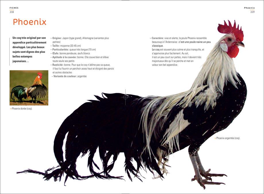 races de poules d ornement