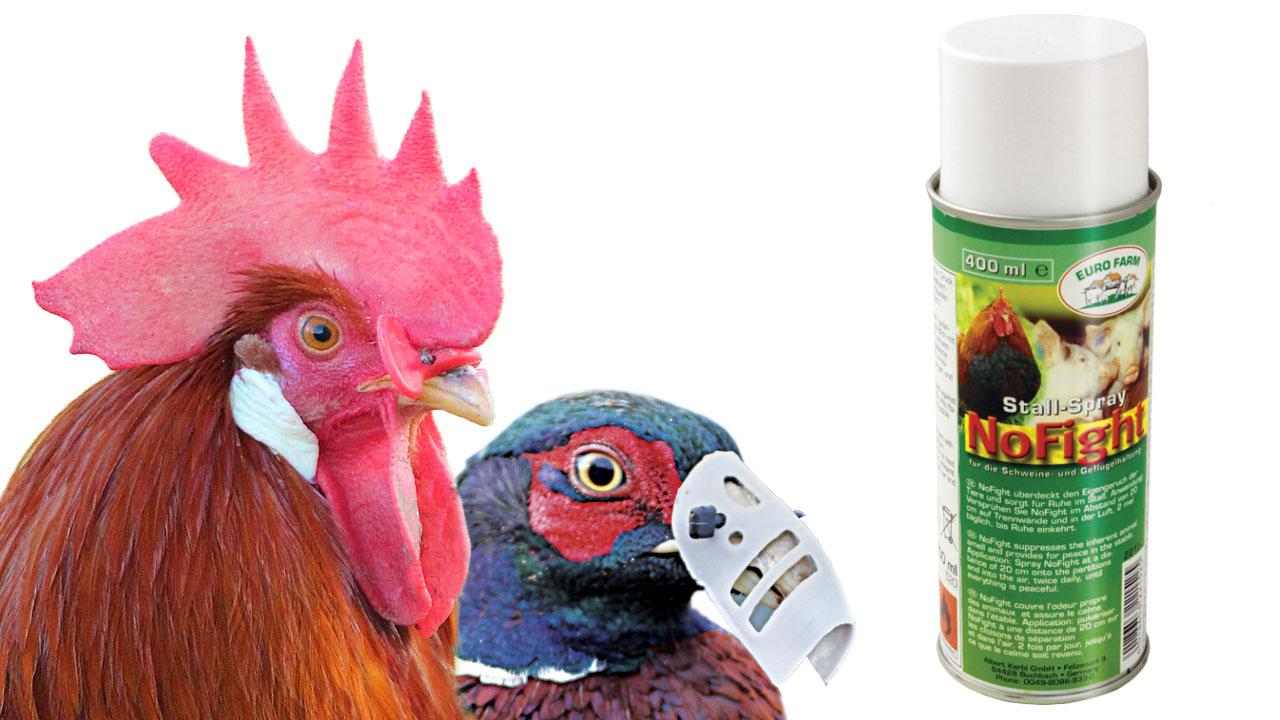 repulsif pour poules