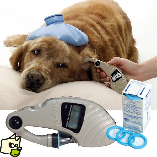 thermometre pour chien