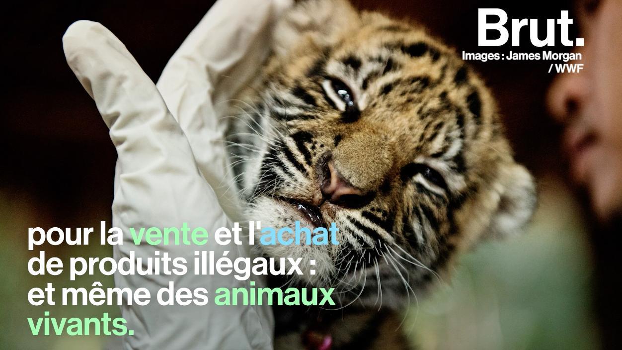 vente animaux vivant en ligne