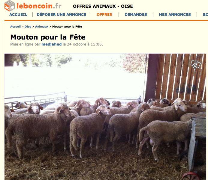 vente de mouton vivant