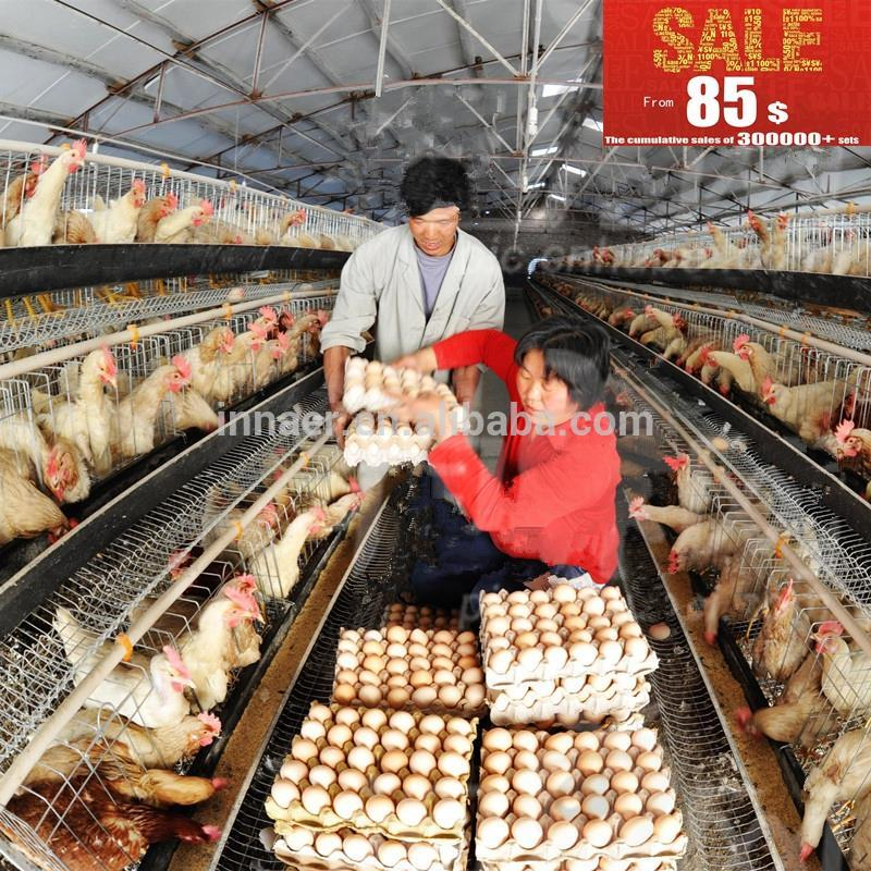acheter poules pondeuses