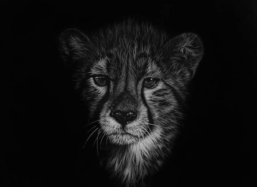 animal noir et blanc