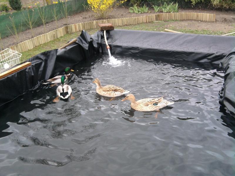 bassin pour canard