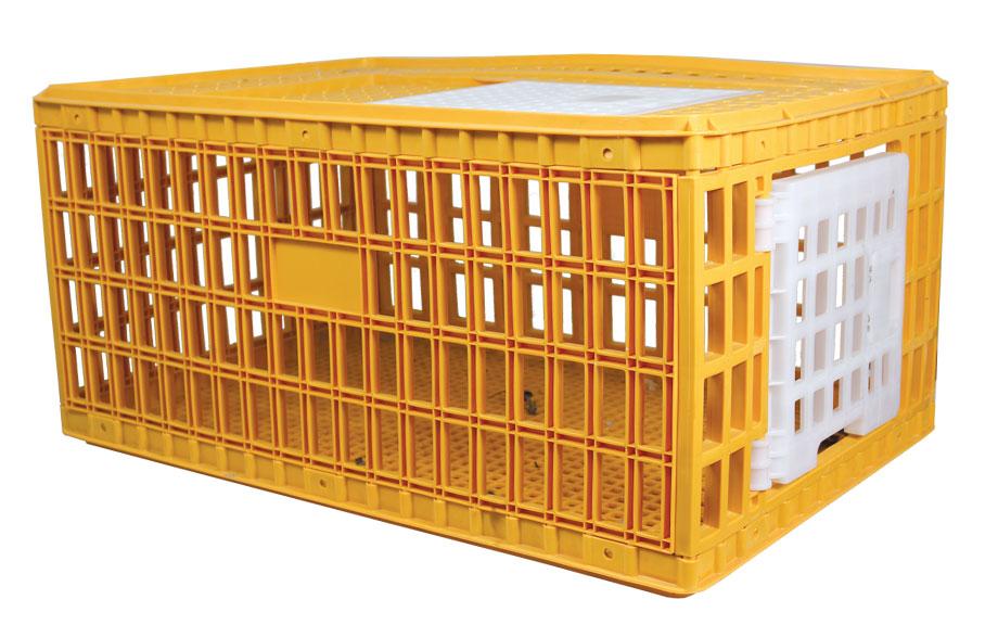 caisse transport poule