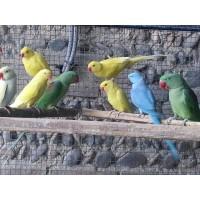 eleveur d oiseaux exotique