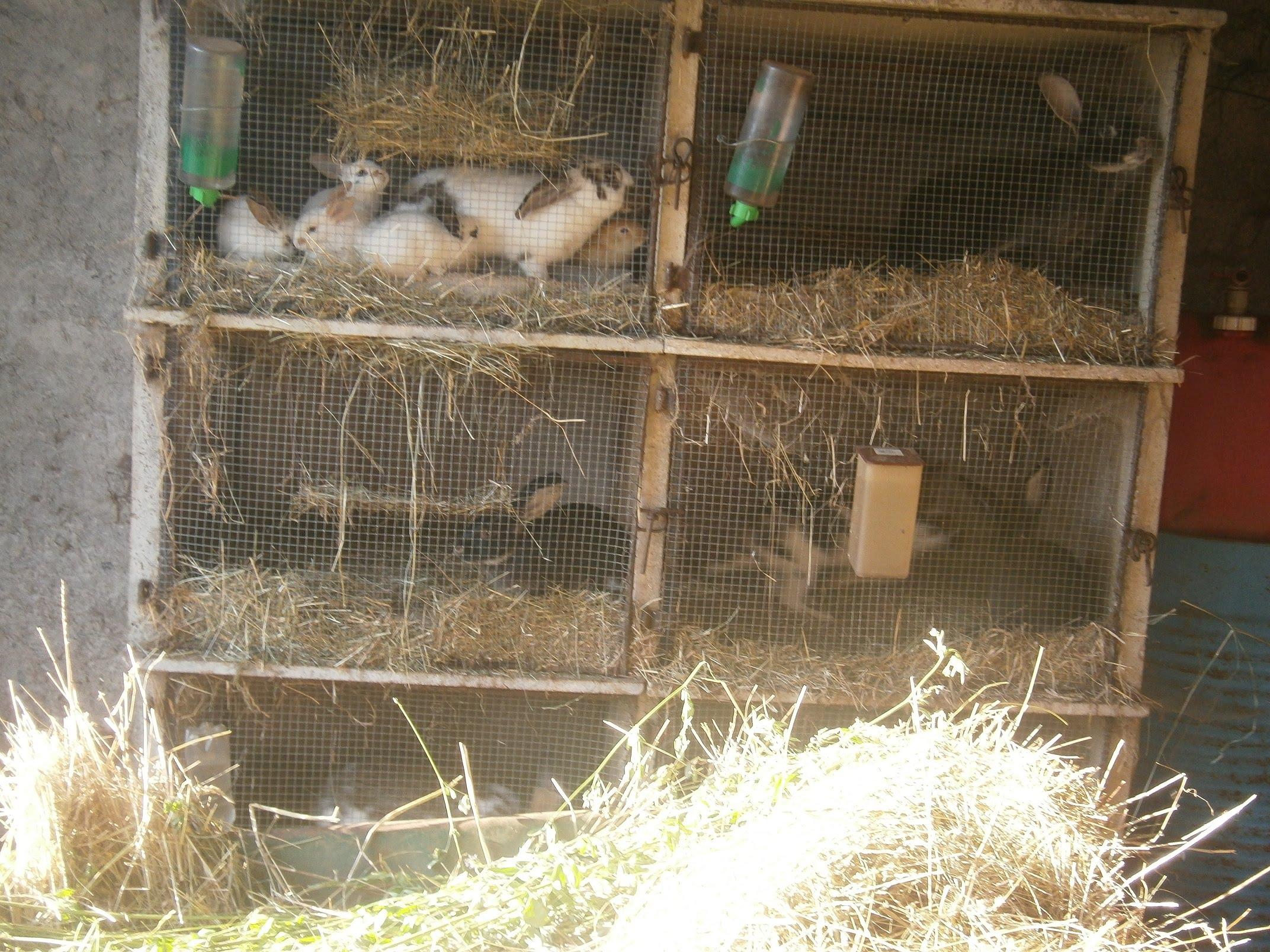 eleveur de lapin