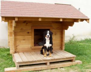 niche grand chien
