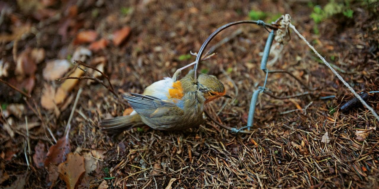 piege a oiseaux