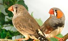 vente d oiseaux particulier
